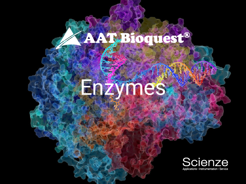 Enzymes800_600