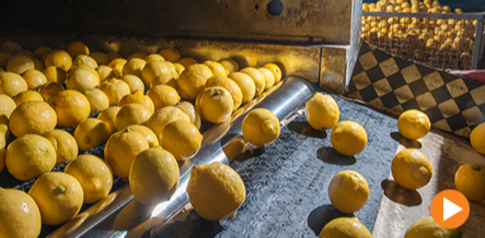 Sanitation is critical to food safety and ineffective cleaning can affect the appearance and taste of food, harbor microorganisms and promote the production of biofilms. So, if your sanitation system only detects ATP, you're missing potential contaminants.